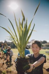 15066218867_ed356942c5_b_Auckland Tree Planting girl_Sustainable Coastlines Hawaii